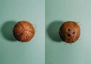 Kokos Blumenerde Für Welche Pflanzen : deine pflanzen im kokoskleid diy blumenampel ou magazin ~ Orissabook.com Haus und Dekorationen