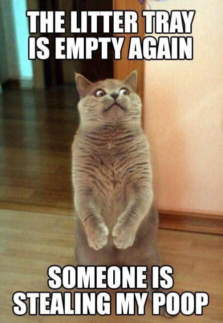 Funny Poop Memes - because cat poo is delicious cat poop was stolen meme slapcaption com pets pinterest