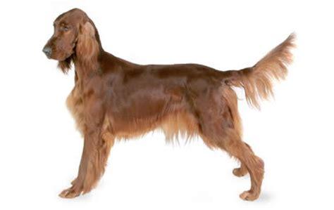 20 Super Friendly Dog Breeds Dogtime