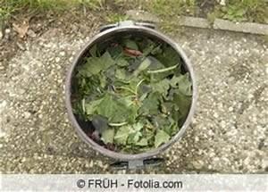Maden In Kirschen : schwarze blattl use bek mpfen die besten hausmittel ~ Lizthompson.info Haus und Dekorationen