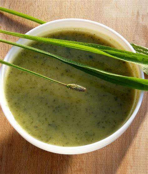 cuisine sauvage couplan 033 soupe plantain songeons ok jpg