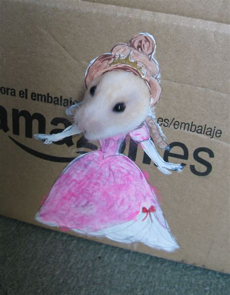 funny images   hamster playing dress   cardboard
