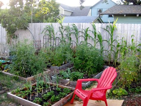 Farming In Your Backyard by Backyard Farming Your Backyard Farm