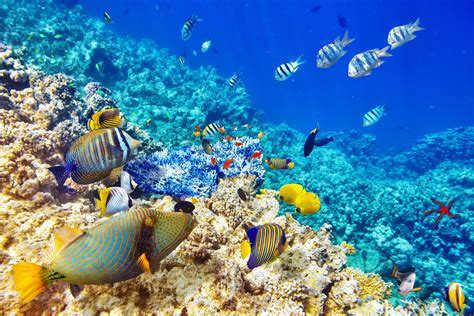coral images   wallpaperwiki