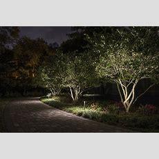 Lighting Small Trees  Sidera® Landscape Lighting