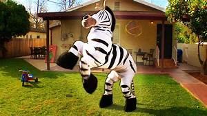 Dope Zebra - Rhett & Link (Official Original Video) - YouTube