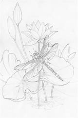 Sunrise Coloring Drawing Dragonfly Sketch Bergsma Adult Sketches Drawings Press Paintings Morning Pencil Dragonflies Line Colouring Amethyst Jody Painting Adults sketch template