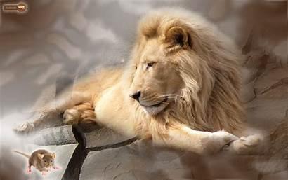 Lion Wallpapers Desktop Background Face Animal Roar