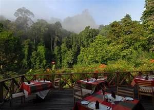 Borneo Rainforest Lodge | Hotels in Danum Valley | Audley ...