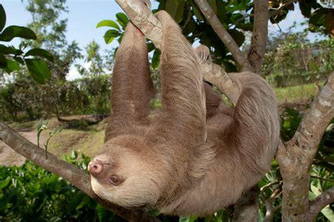 cual es el animal mas lento del mundo batanga