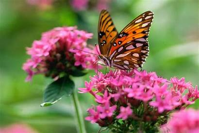 Butterfly Wallpapers Desktop Mobile Welcome