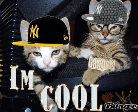 Gangster Cats Picture #130767415 Blingeecom