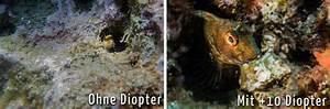 Abbildungsmaßstab Berechnen : was ist eigentlich makro unterwasser ~ Themetempest.com Abrechnung