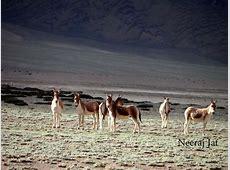 मुसाफ़िर हूँ यारों शोकार Tso Kar झील