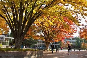 Sac State Named Tree Campus USA