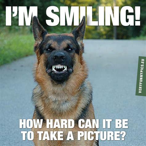 hard  smile  command  funny pics