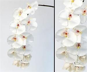 Getrocknete Blüten Kaufen : orchideen kunstblumen mit 11 wei en bl ten kaufen ~ Orissabook.com Haus und Dekorationen