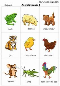 Animal Pictures And Sounds   Nice Pics