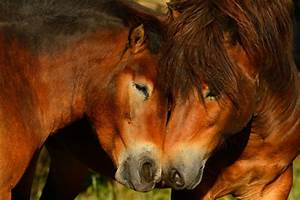 Advertise For Sale By Owner Europe Plans For Eco Friendly Re Wild Horses On The Edge