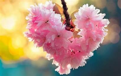 Spring Flowers Heart Nature Bloom Desktop Backgrounds