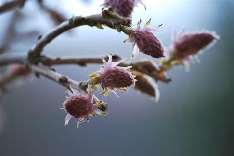 wisteria buds wisteria buds by terrornola on deviantart