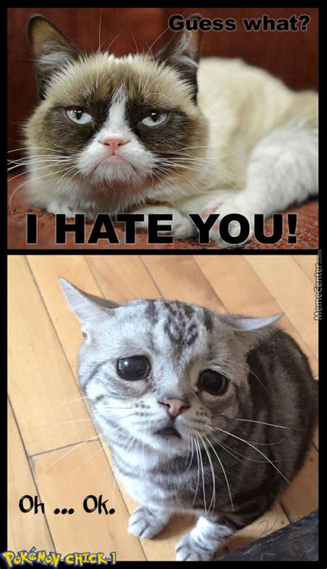 Internet Cat Meme - cat memes best collection of funny cat pictures