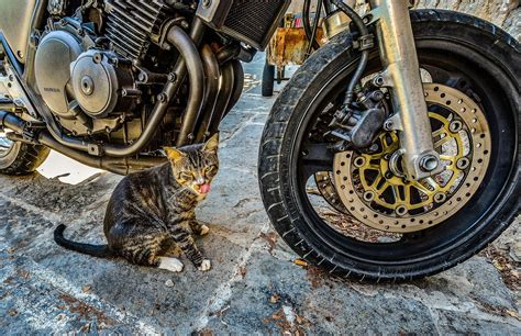 13 Best Motorcycle Tires [buyer's Guide + Reviews]