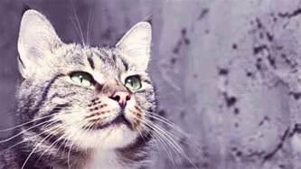 cat antibiotics antibiotics for cats petcarerx