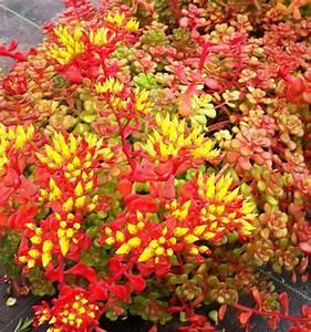 Acheter Des Plantes : ou acheter des plantes o acheter des plantes d 39 aquarium pour poisson rouge o trouver o ~ Melissatoandfro.com Idées de Décoration