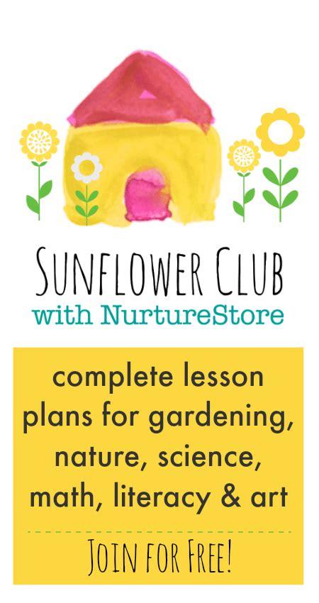 Nurturestore Sunflower Club  Sunflower Activities For Kids Nurturestore