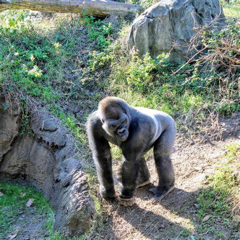 zoos usa zoo passport