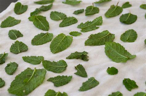 cuisine tout compris conserver sécher congeler et utiliser la menthe récoltée