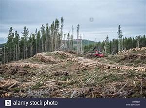 Fällen Von Bäumen : forestry vehicle stockfotos forestry vehicle bilder alamy ~ Eleganceandgraceweddings.com Haus und Dekorationen