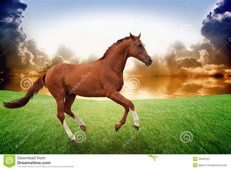 horse running sunset field brown background peaceful grass sea chinese preview