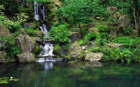 Download Jungle HD Backgrounds Free | PixelsTalk.Net