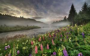Norway, forest, river, trees, fog, flowers, summer ...