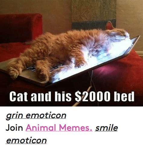 Animal In Bed Meme - 25 best memes about meme smile meme smile memes