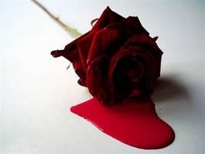 black roses red | vhaemo