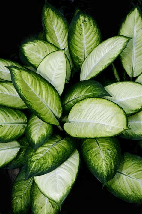plante interieur facile entretien plante d interieur facile d entretien coudec