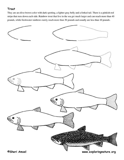 How To Draw A Bass Boat Step By Step by Trout Drawing Lesson
