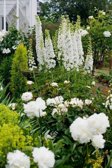 a vignette of white delphinium stalks peonies and roses