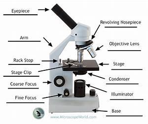 A Beginner U0026 39 S Guide To Microscopes  U0026 Bacteria