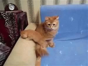 I has a sad - CUTE CAT GIFS