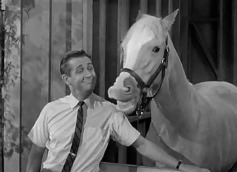 Alan Young Dead Wilbur From 'mister Ed' Dies At 96. Watch Slingbox On Apple Tv Could I Get A Loan. First Bank Lexington Tn How To Lock A Website. Cheap Website Design And Hosting. Auto Mechanic Training School. Can I Get My Rn Degree Online. Virginia Beach University Windows 2008 32 Bit. Electricity Companies Comparison. Family Reunion Destination Ideas