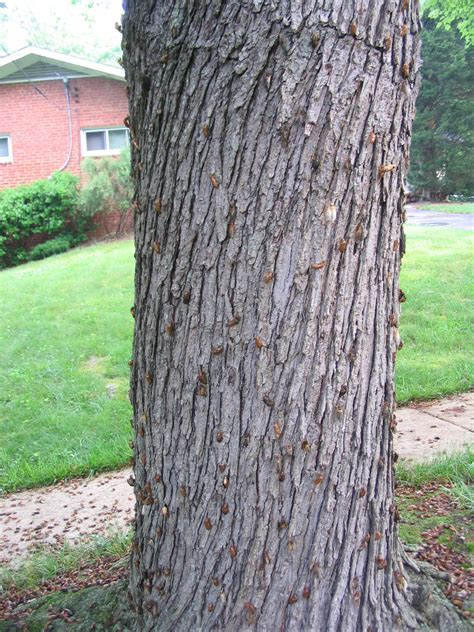 old tree trunk wood 10jpg pictures