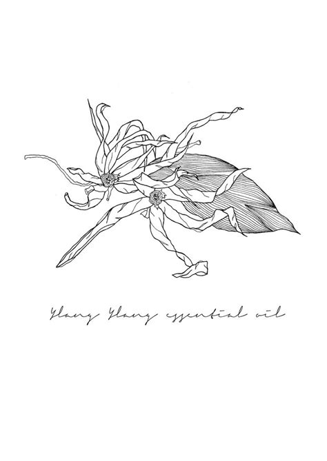 Ylang Ylang Essential Oil : By Pip and Fawn Illustration