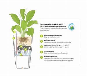 Lechuza Bewässerungssystem Anleitung : lechuza fensterbank komplettset delta 18 x 15 x 40 cm dehner ~ Eleganceandgraceweddings.com Haus und Dekorationen