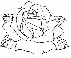 Roses Drawings Outlines Wwwimgkidcom The Image Kid