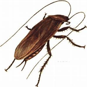 cockroach clipart | Clipart Panda - Free Clipart Images