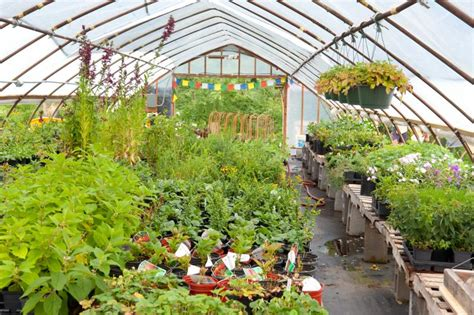 hill house plants plant nursery
